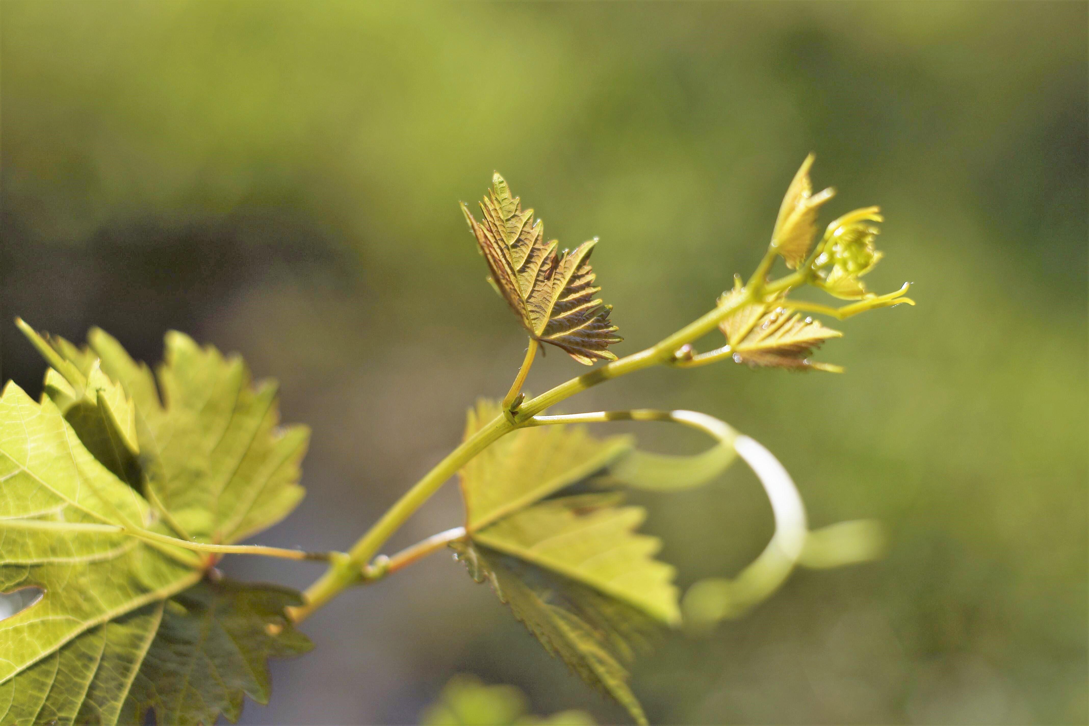 regionale kennismakingsdagen leergemeenschap waarderende gemeenteopbouw jan hendriks goede wijn PKN RKK NGK Quist kerkadvies raadgervers